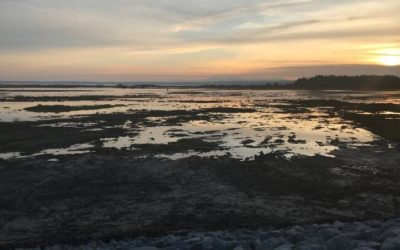 Leque Island: 250 Acres Open to the Tide